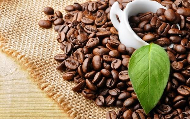 Les produits agricoles du Vietnam tres populaires en Algerie hinh anh 1