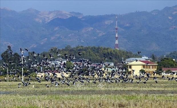 Des milliers de Bec-ouverts indiens observables dans le Centre du Vietnam hinh anh 1