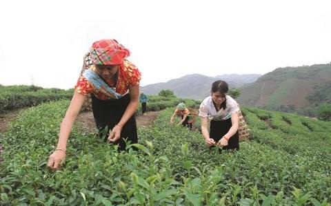 A Thanh Hoa, l'agroforesterie pour lutter contre la pauvrete hinh anh 1