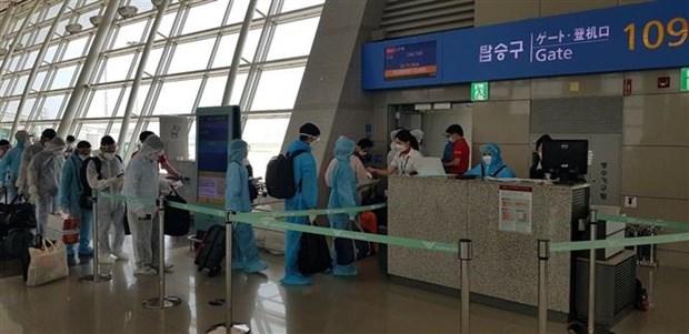 COVID-19 : plus de 230 Vietnamiens rapatries de Republique de Coree hinh anh 1