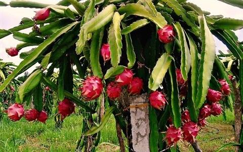 Vinh Phuc vise une agriculture moderne et durable hinh anh 1
