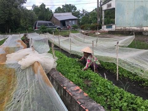 Microfinance et formation aident les Khmers a sortir de la pauvrete hinh anh 1