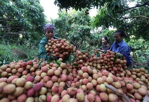 De bons signes pour les exportations de fruits et legumes hinh anh 1