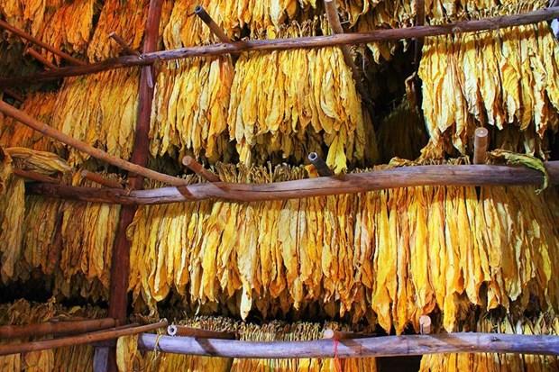 Le Vietnam publie les contingents tarifaires pour tabacs et œufs europeens hinh anh 1