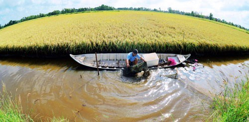 Le delta du Mekong developpe la peneiculture en symbiose avec la riziculture hinh anh 1
