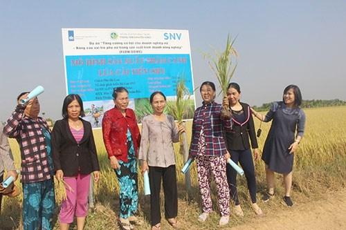 Un projet finance par les Pays-Bas aide les femmes de Binh Thuan dans la production agricole hinh anh 1