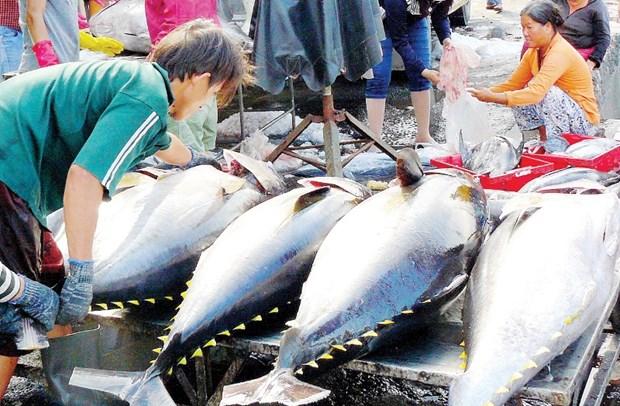 Les exportations de thon devraient augmenter fortement au cours des derniers mois de l'annee hinh anh 1