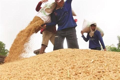 L'EVFTA dope les exportations vietnamiennes de riz hinh anh 2