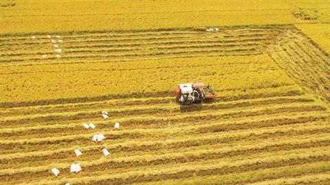 Le riz vietnamien arrive a maturite sur le marche mondial hinh anh 2