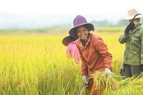 L'EVFTA dope les exportations vietnamiennes de riz hinh anh 1