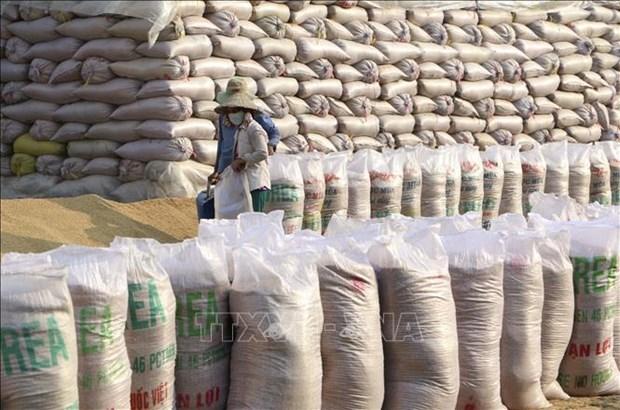 Pres de 12 millions de dollars pour reconstituer le stock national de riz hinh anh 1