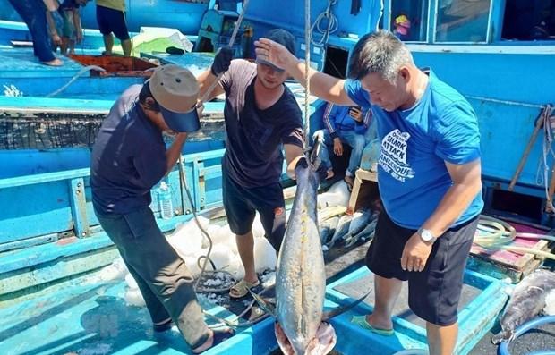 Record des exportations de thon vers l'Italie hinh anh 1