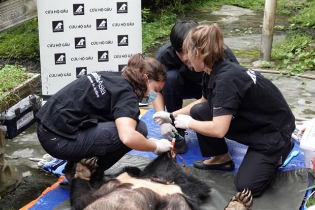 Deux ours noirs d'Asie captifs rejoignent leur nouvelle demeure hinh anh 1