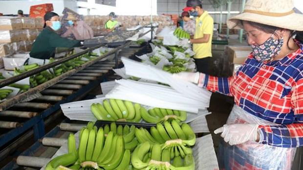 Les echanges commerciaux entre le Vietnam et le Laos retrouvent des couleurs hinh anh 1