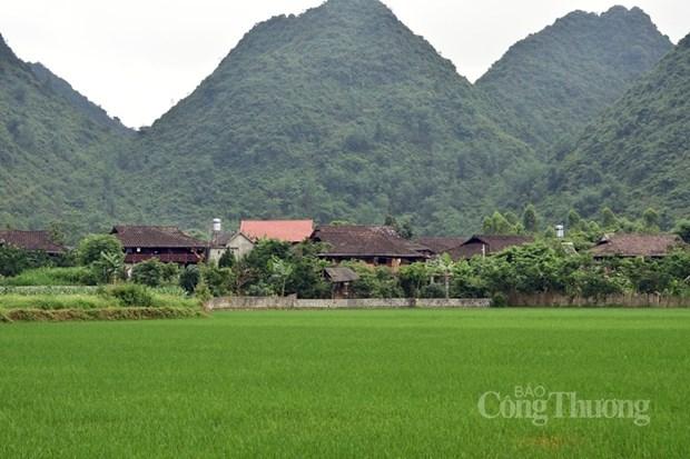 Renforcer les politiques en faveur des minorites ethniques dans les zones montagneuses hinh anh 1