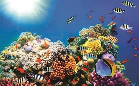 La Reserve marine de Phu Quoc, un paradis sous-marin hinh anh 1