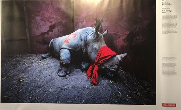 Une exposition de photos de la presse mondiale 2020 s'ouvre a Hanoi hinh anh 1