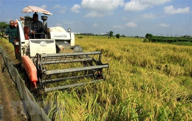 Le Vietnam s'emploie a assurer la securite alimentaire hinh anh 1