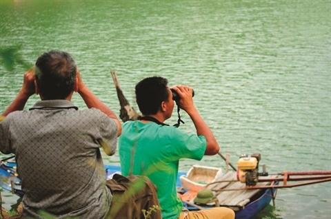 Au Vietnam, un nouvel espoir pour la tortue geante de Swinhoe hinh anh 1