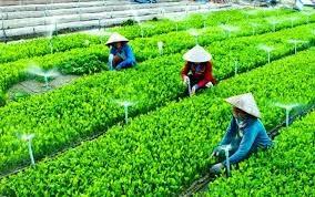 Le pays compte 1.292 cooperatives agricoles appliquant la haute technologie hinh anh 1