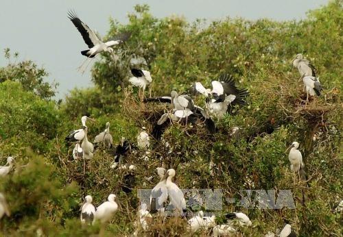 Le delta du Mekong fait face a un declin des oiseaux, poissons et plantes sauvages hinh anh 1