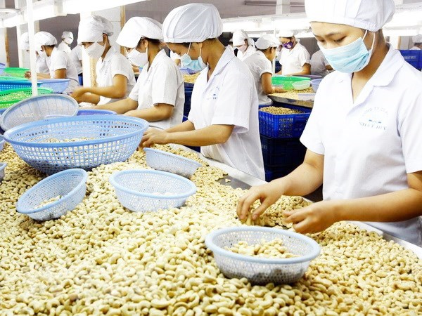 L'agriculture atteindrait un revenu d'exportation de 41 mds de dollars hinh anh 1