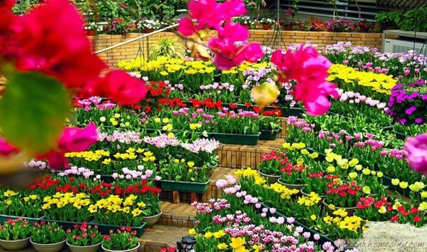 Quang Binh accueillera le Festival international des fleurs en 2023 hinh anh 1