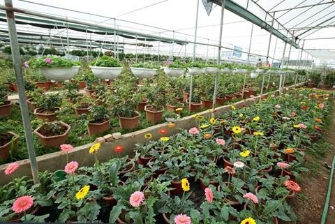 La floriculture change la physionomie de Xuan Quan hinh anh 2