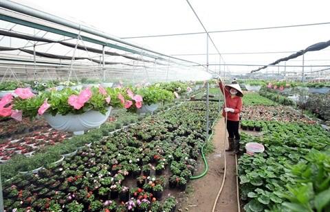 La floriculture change la physionomie de Xuan Quan hinh anh 1