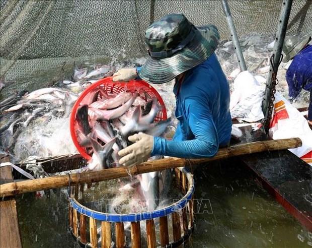 Les exportations des produits aquatiques augmentent de 2,2% en deux mois hinh anh 1