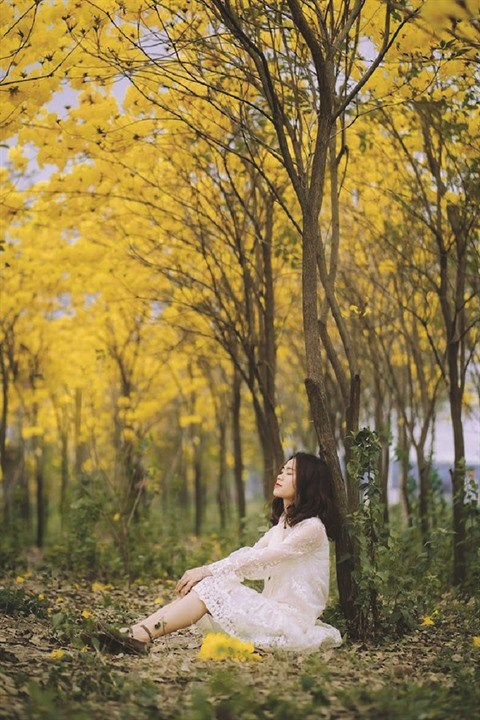 La beaute des arbres trompettes a Bac Giang hinh anh 2