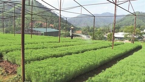 Quang Ninh œuvre pour la biodiversite hinh anh 1