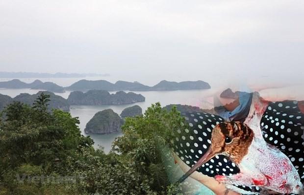 Le Vietnam a l'heure de la restauration des ecosystemes hinh anh 1