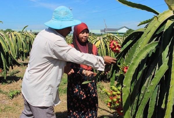 Dong Nai attire les investissements dans les regions de minorites ethniques hinh anh 1