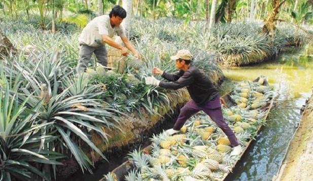 Kien Giang se concentre sur la conservation des ressources genetiques animales et vegetales hinh anh 1