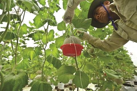 L'agriculture de Ha Tinh creuse aussi le filon de la transformation numerique hinh anh 2