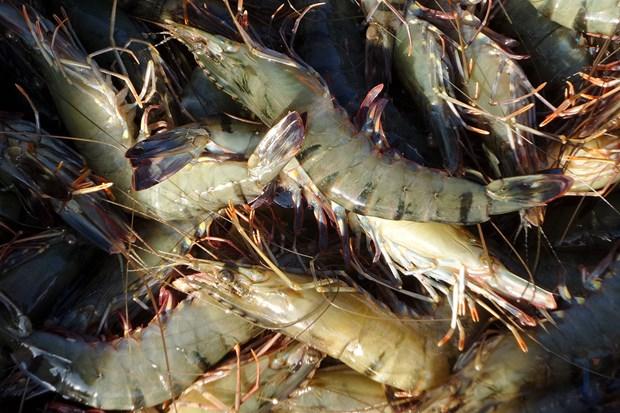 Les exportations de crevettes, pangasius, thon… toutes chutent fortement hinh anh 1