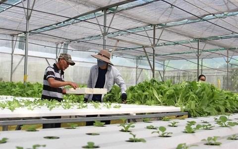 Afarm aide a cultiver des legumes bio sans se planter hinh anh 2