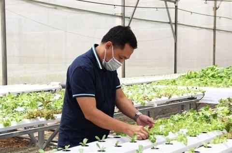 Afarm aide a cultiver des legumes bio sans se planter hinh anh 1