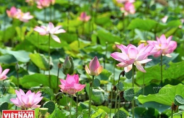 Le tourisme prend son essor dans la capitale du lotus hinh anh 1