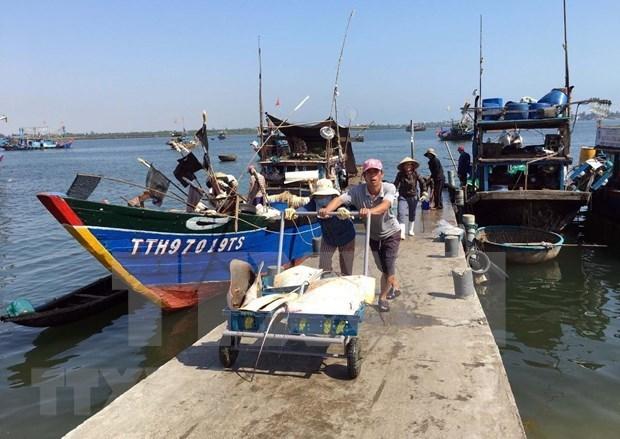 Le secteur de la peche prend le large pour developper l'economie maritime hinh anh 2