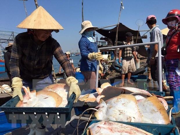 Le secteur de la peche prend le large pour developper l'economie maritime hinh anh 1