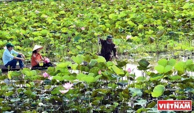 Le tourisme prend son essor dans la capitale du lotus hinh anh 2