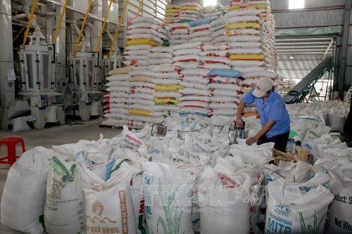 Les ALE servent de tremplin pour l'exportation de riz hinh anh 1