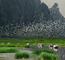 La réserve naturelle submergée de Van Long devient le 9e site Ramsar au Vietnam