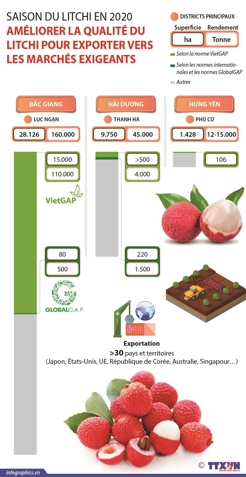 Ameliorer la qualite du litchi pour exporter vers les marches exigeants hinh anh 1