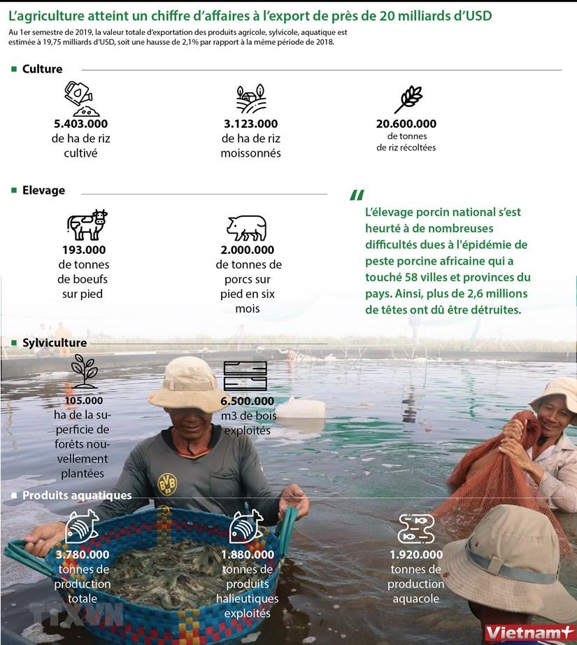L'agriculture atteint un chiffre d'affaires a l'export de pres de 20 milliards d'USD hinh anh 1