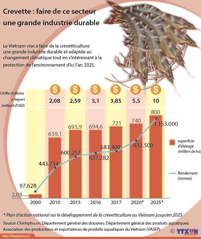Crevette : faire de ce secteur une grande industrie durable hinh anh 1