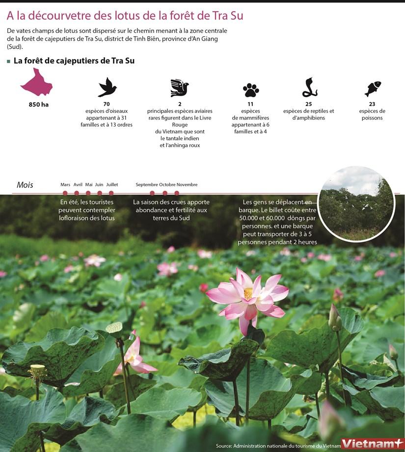 Plongee dans les champs de lotus a Tra Su, dans le Sud hinh anh 1