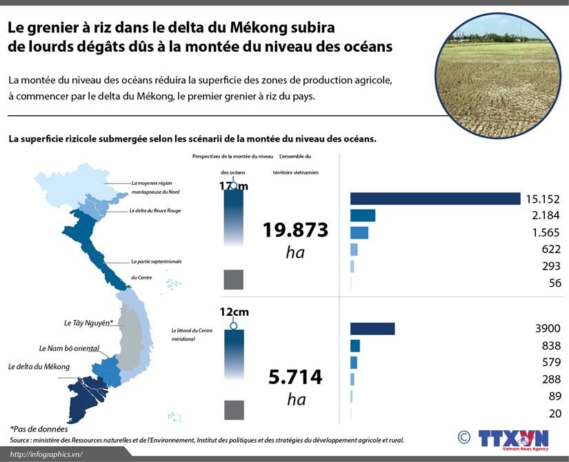 Grenier a riz dans le delta du Mekong subira de lourds degats hinh anh 1